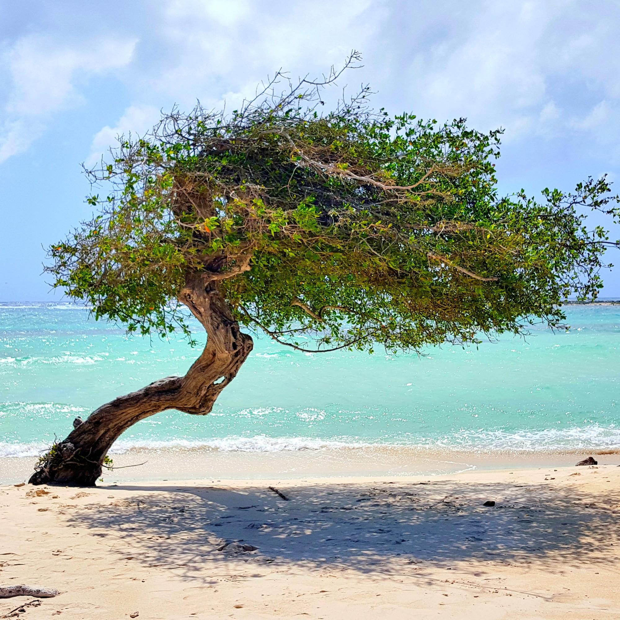 baby beach tree